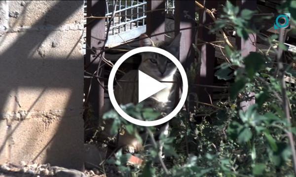 L'Ajuntament engega una campanya per controlar les colònies de gats al municipi