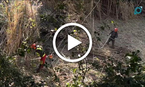 L'Agència Catalana de l'Aigua, encarregada del desbrossament de la riera de la Selva