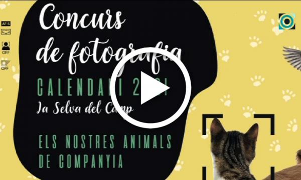 Els animals de companyia, protagonistes del concurs de fotografia pel calendari de 2021